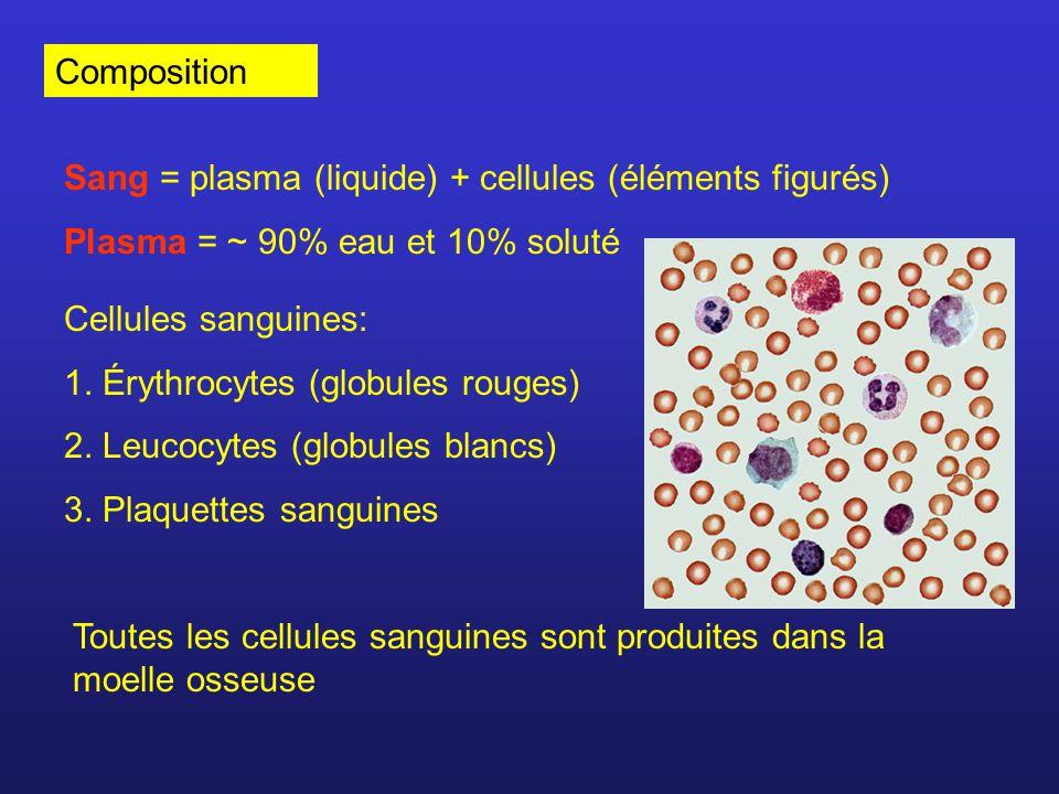 Érythrocytes 4 à 6 millions par mm 3 Pas de noyau, pas dorganites cellulaires Taille ~ 8 m ( surface par rapport au volume) Chaque globule contient ~ 280 millions molécules d hémoglobines Hb + O 2 HbO 2