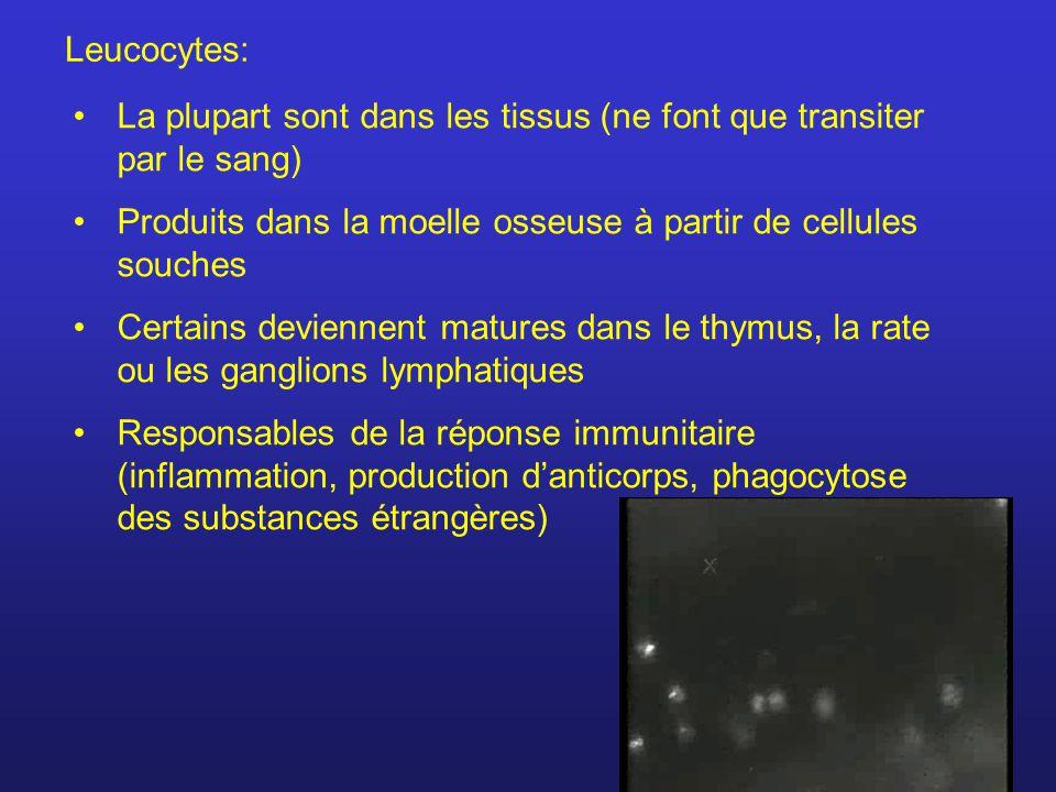 Plaquettes sanguines Se forment par la fragmentation de grosses cellules de la moelle osseuse.
