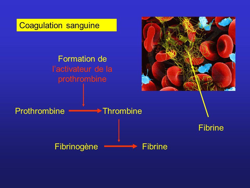 Hémophilie = maladie héréditaire caractérisée par la difficulté du sang à coaguler Trois types: Hémophilie de type A : déficience en facteur VIII Hémophilie de type B : déficience en facteur IX Hémophilie de type C : déficience en facteur XI