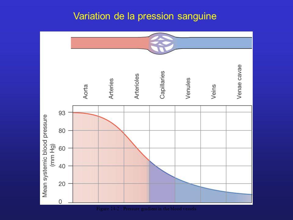 Figure 14-2 : Pressure gradient in the blood vessels Variation de la pression sanguine