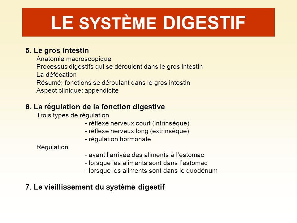 LE SYSTÈME DIGESTIF 5. Le gros intestin Anatomie macroscopique Processus digestifs qui se déroulent dans le gros intestin La défécation Résumé: foncti