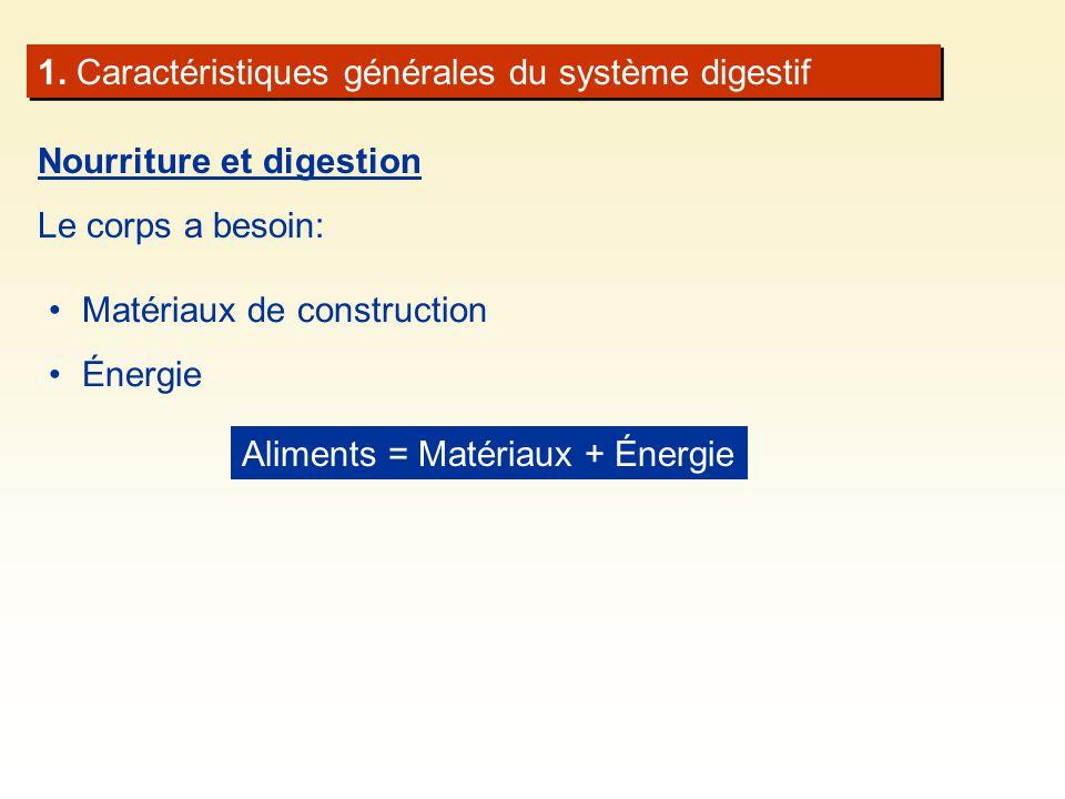 1. Caractéristiques générales du système digestif Nourriture et digestion Le corps a besoin: Matériaux de construction Énergie Aliments = Matériaux +