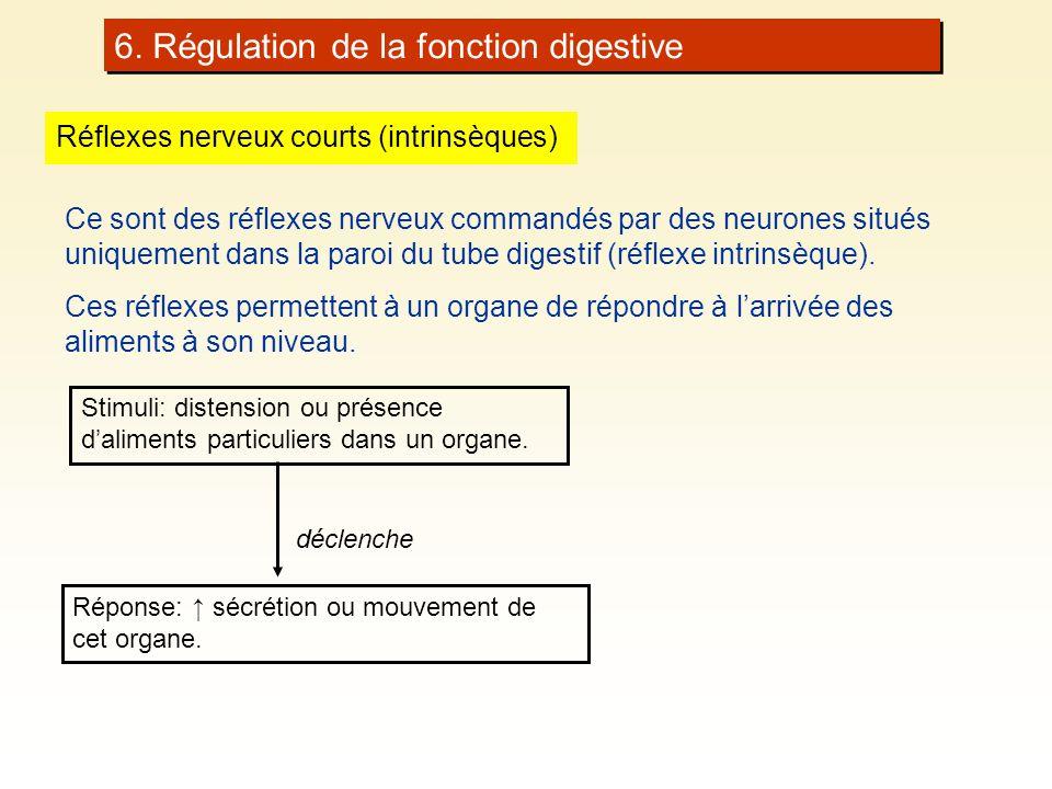 6. Régulation de la fonction digestive Réflexes nerveux courts (intrinsèques) Ce sont des réflexes nerveux commandés par des neurones situés uniquemen