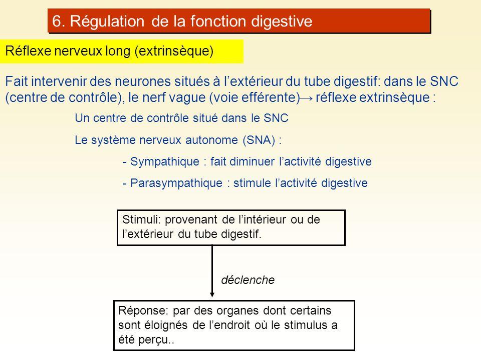 6. Régulation de la fonction digestive Réflexe nerveux long (extrinsèque) Fait intervenir des neurones situés à lextérieur du tube digestif: dans le S