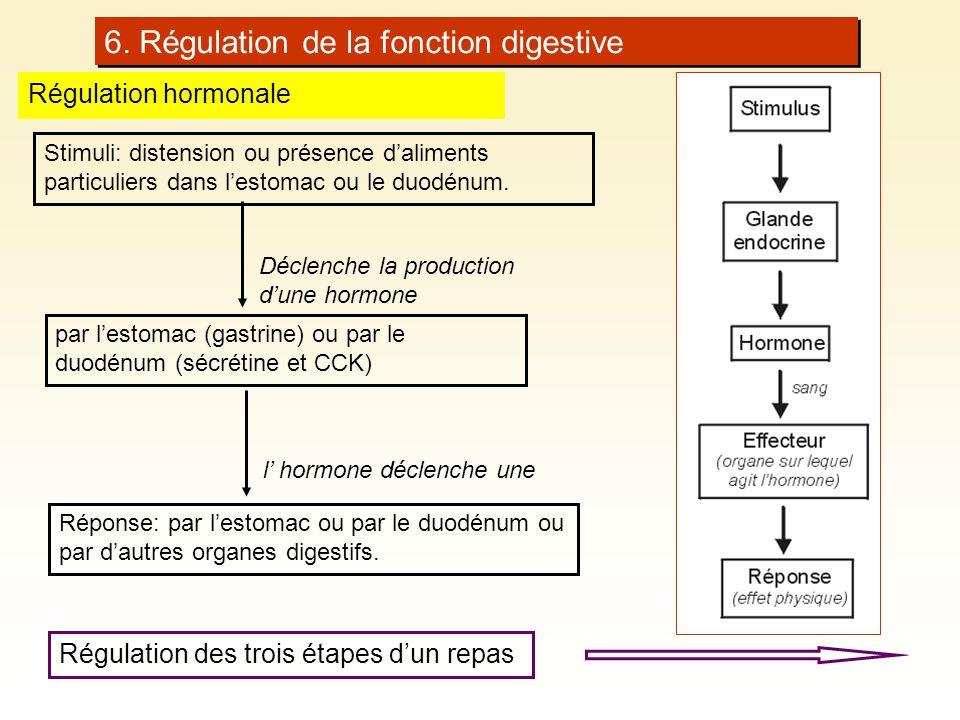 6. Régulation de la fonction digestive Régulation hormonale Stimuli: distension ou présence daliments particuliers dans lestomac ou le duodénum. par l