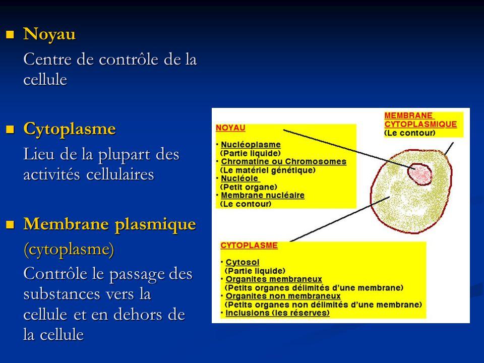 Noyau Noyau Centre de contrôle de la cellule Cytoplasme Cytoplasme Lieu de la plupart des activités cellulaires Membrane plasmique Membrane plasmique(