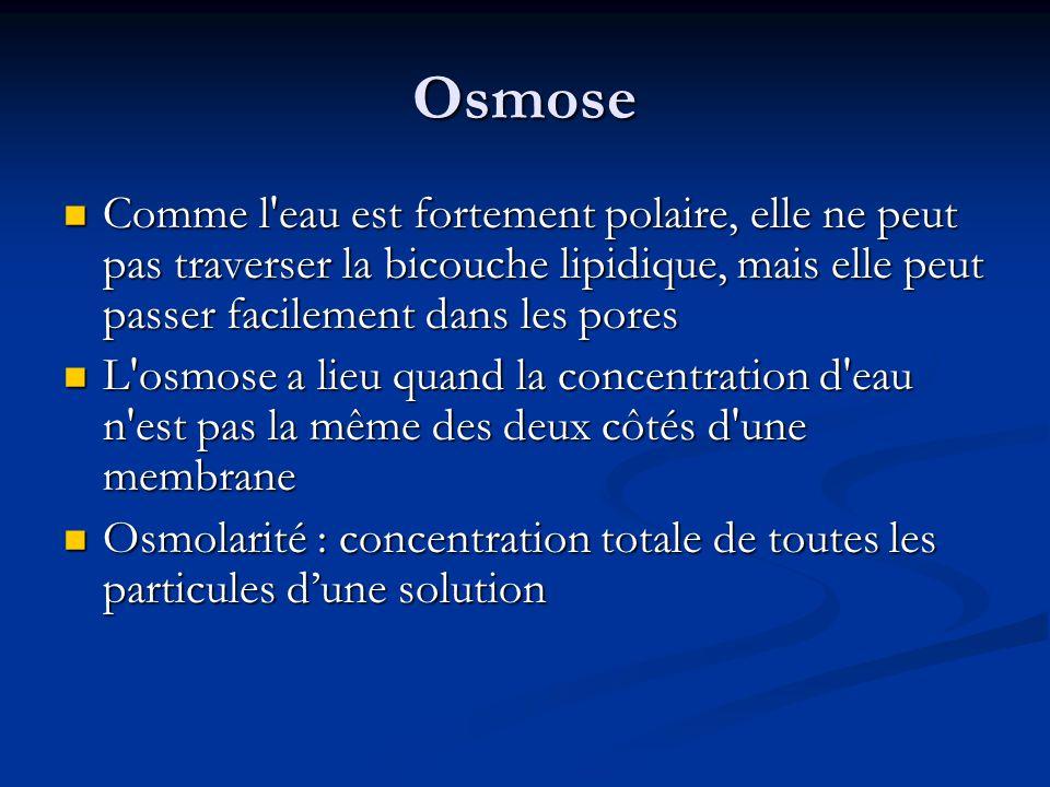 Osmose Comme l'eau est fortement polaire, elle ne peut pas traverser la bicouche lipidique, mais elle peut passer facilement dans les pores Comme l'ea