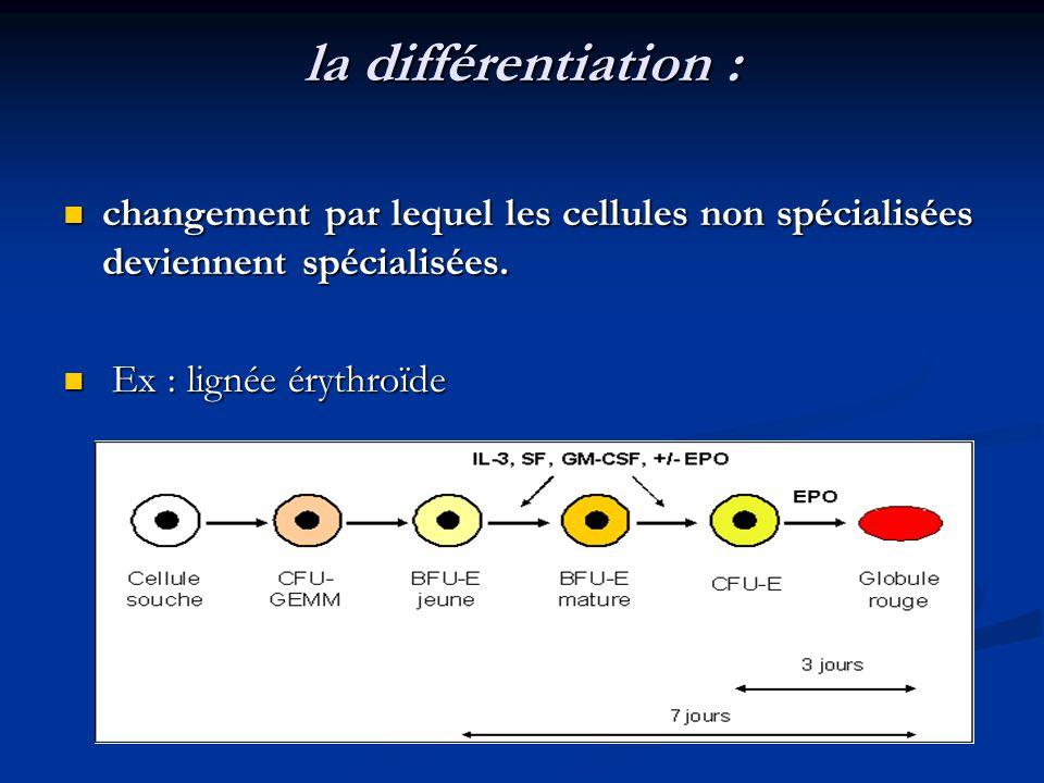la différentiation : changement par lequel les cellules non spécialisées deviennent spécialisées. changement par lequel les cellules non spécialisées