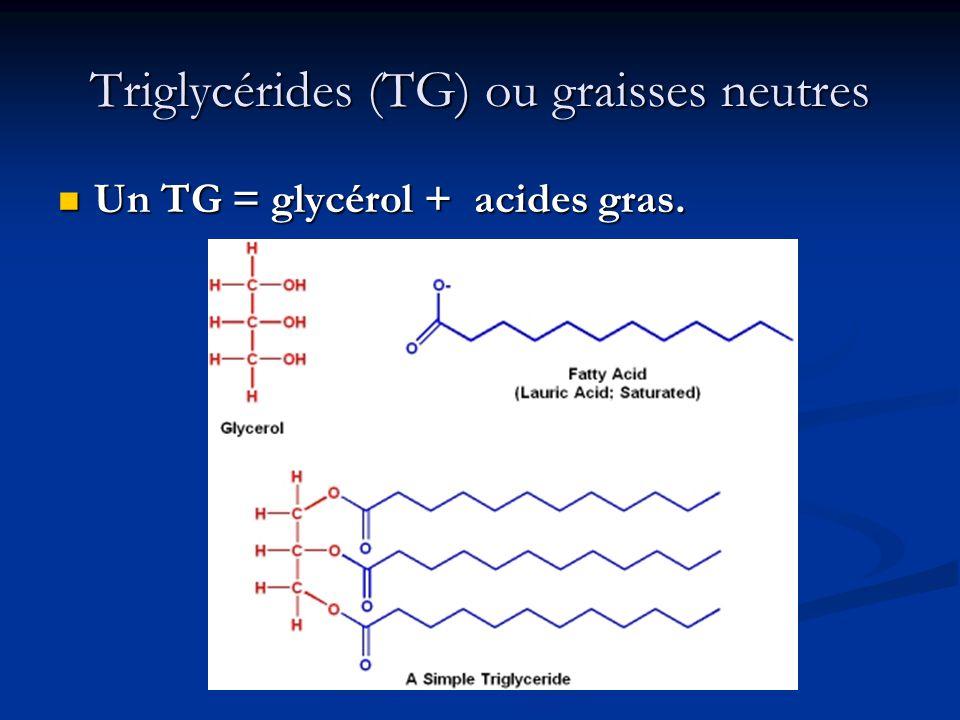 Triglycérides (TG) ou graisses neutres Un TG = glycérol + acides gras. Un TG = glycérol + acides gras.