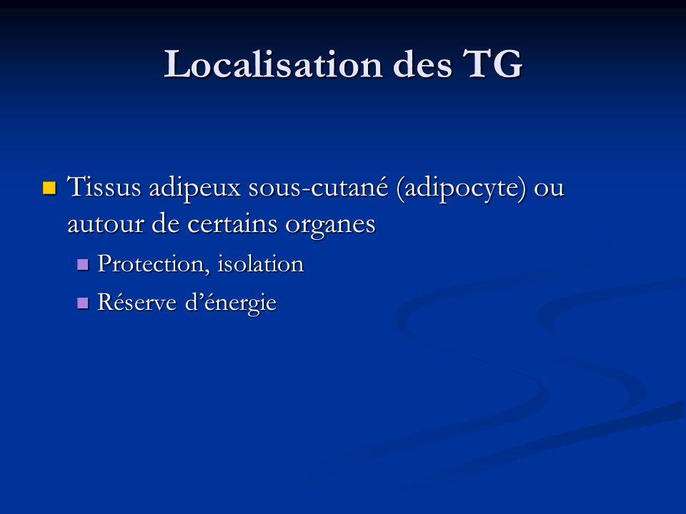Localisation des TG Tissus adipeux sous-cutané (adipocyte) ou autour de certains organes Tissus adipeux sous-cutané (adipocyte) ou autour de certains