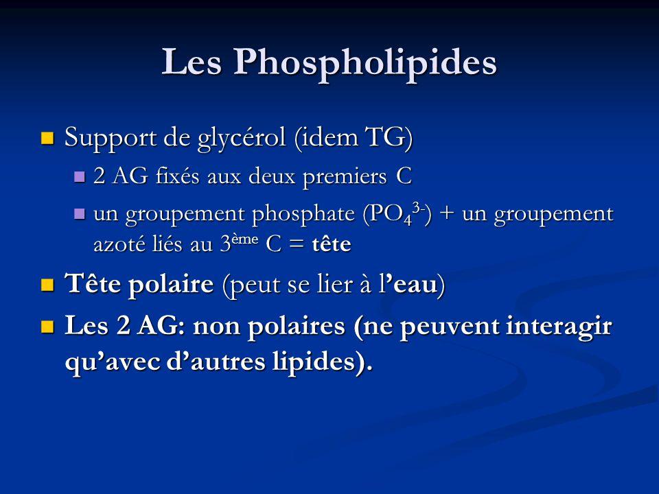 Les Phospholipides Support de glycérol (idem TG) Support de glycérol (idem TG) 2 AG fixés aux deux premiers C 2 AG fixés aux deux premiers C un groupe