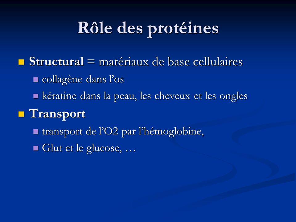 Rôle des protéines Structural = matériaux de base cellulaires Structural = matériaux de base cellulaires collagène dans los collagène dans los kératin