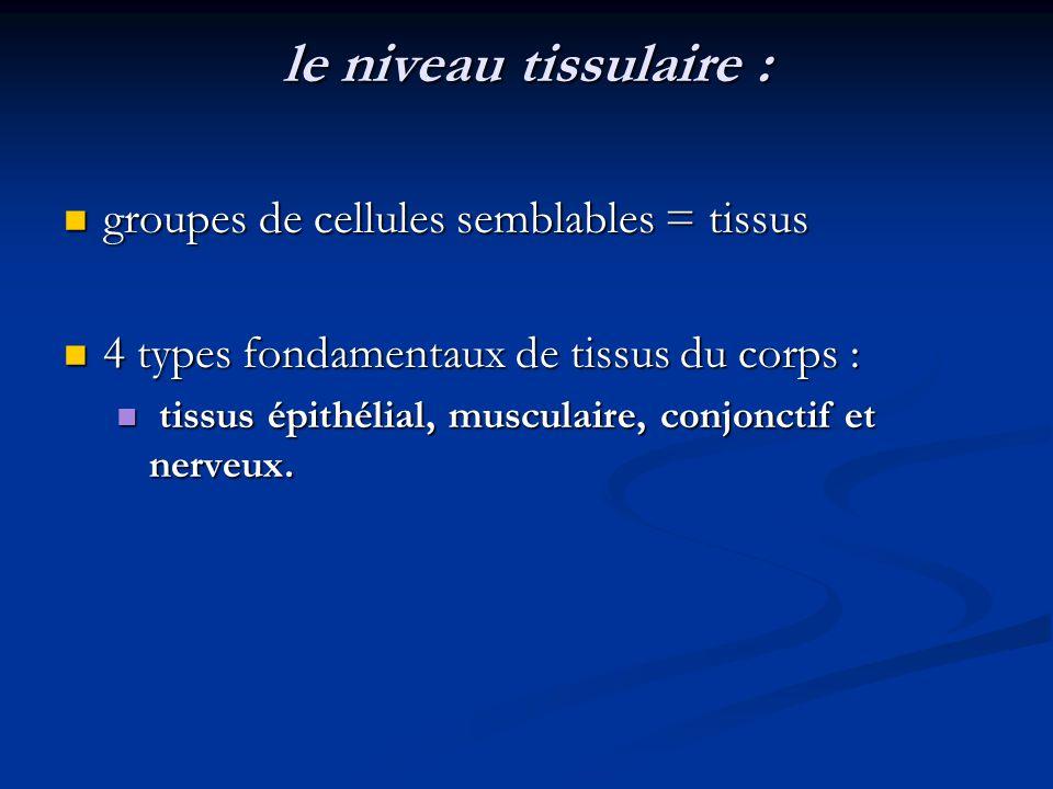 le niveau tissulaire : groupes de cellules semblables = tissus groupes de cellules semblables = tissus 4 types fondamentaux de tissus du corps : 4 typ