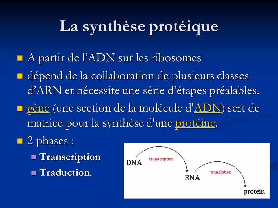 La synthèse protéique A partir de lADN sur les ribosomes A partir de lADN sur les ribosomes dépend de la collaboration de plusieurs classes dARN et né
