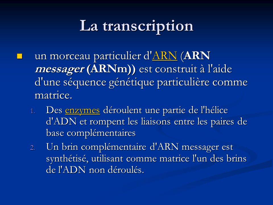 La transcription un morceau particulier d'ARN (ARN messager (ARNm)) est construit à l'aide d'une séquence génétique particulière comme matrice. un mor