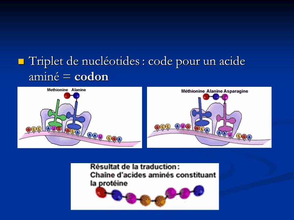 Triplet de nucléotides : code pour un acide aminé = codon Triplet de nucléotides : code pour un acide aminé = codon