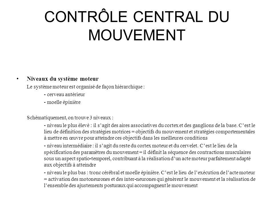CONTRÔLE CENTRAL DU MOUVEMENT Niveaux du système moteur Le système moteur est organisé de façon hiérarchique : - cerveau antérieur - moelle épinière S