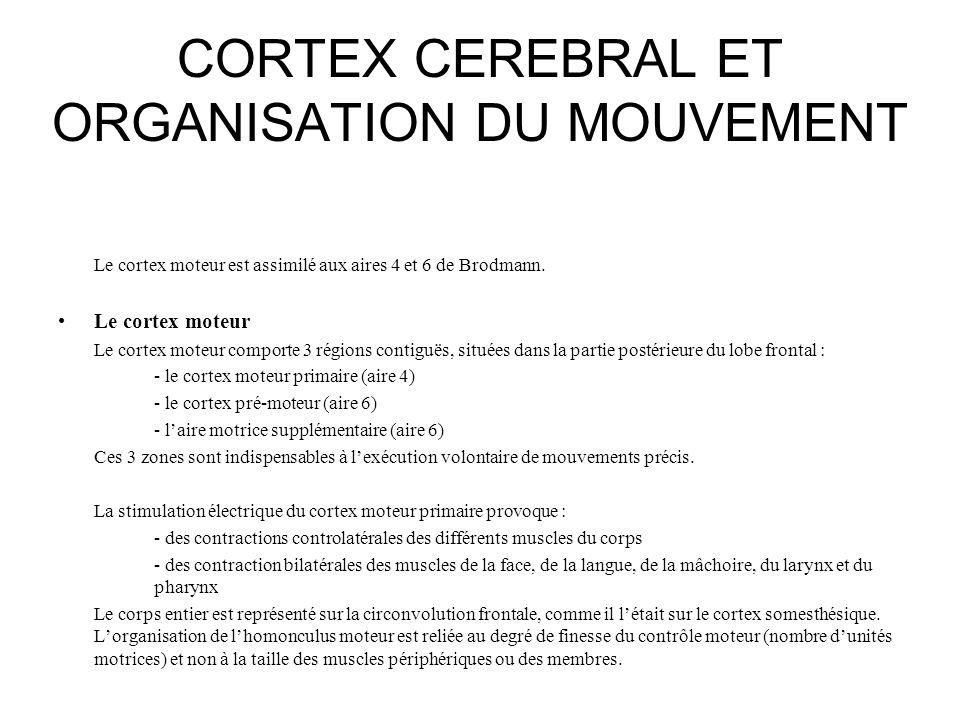 CORTEX CEREBRAL ET ORGANISATION DU MOUVEMENT Le cortex moteur est assimilé aux aires 4 et 6 de Brodmann. Le cortex moteur Le cortex moteur comporte 3