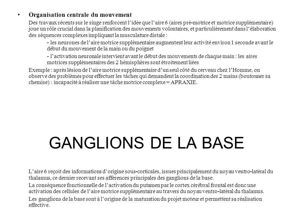 Organisation centrale du mouvement Des travaux récents sur le singe renforcent lidée que laire 6 (aires pré-motrice et motrice supplémentaire) joue un