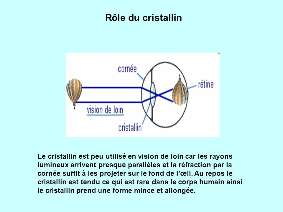 Le cristallin est peu utilisé en vision de loin car les rayons lumineux arrivent presque parallèles et la réfraction par la cornée suffit à les projeter sur le fond de l œil.