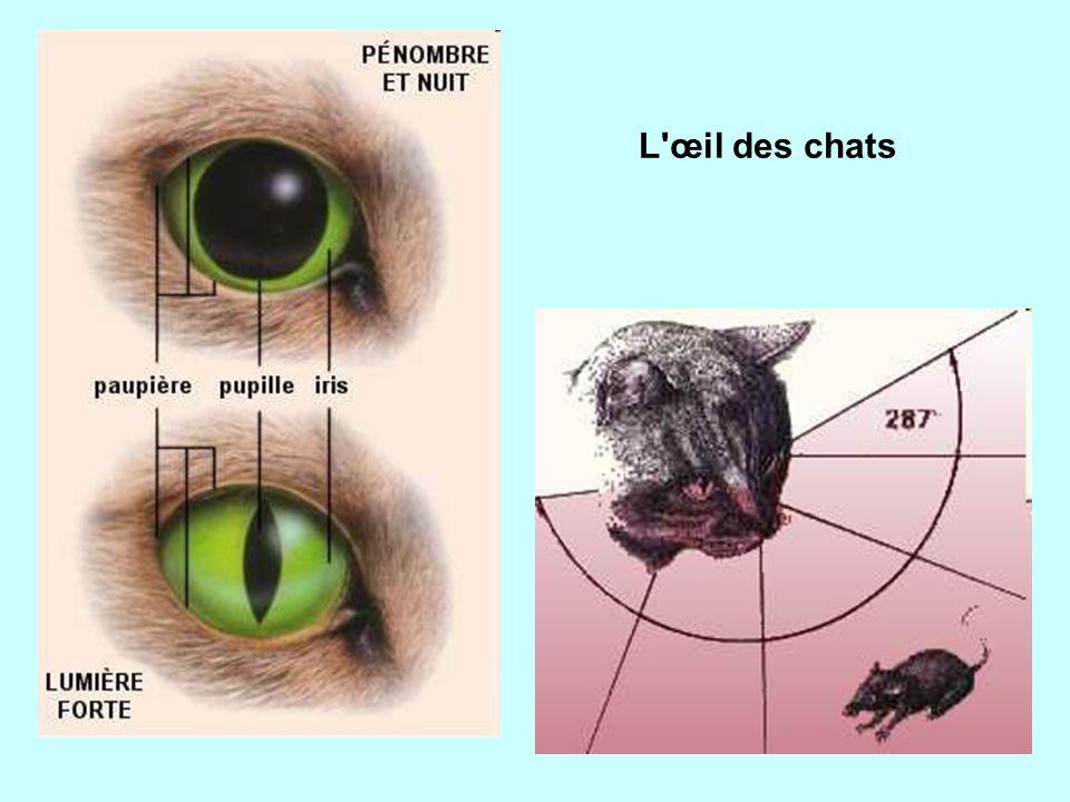 L œil des chats