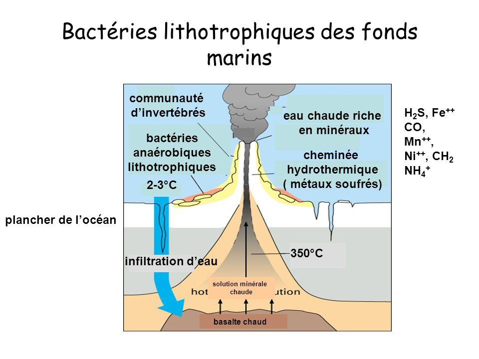 basalte chaud solution minérale chaude Bactéries lithotrophiques des fonds marins bactéries anaérobiques lithotrophiques eau chaude riche en minéraux