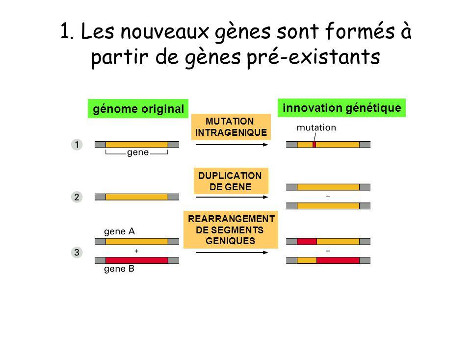 1. Les nouveaux gènes sont formés à partir de gènes pré-existants génome original innovation génétique MUTATION INTRAGENIQUE DUPLICATION DE GENE REARR