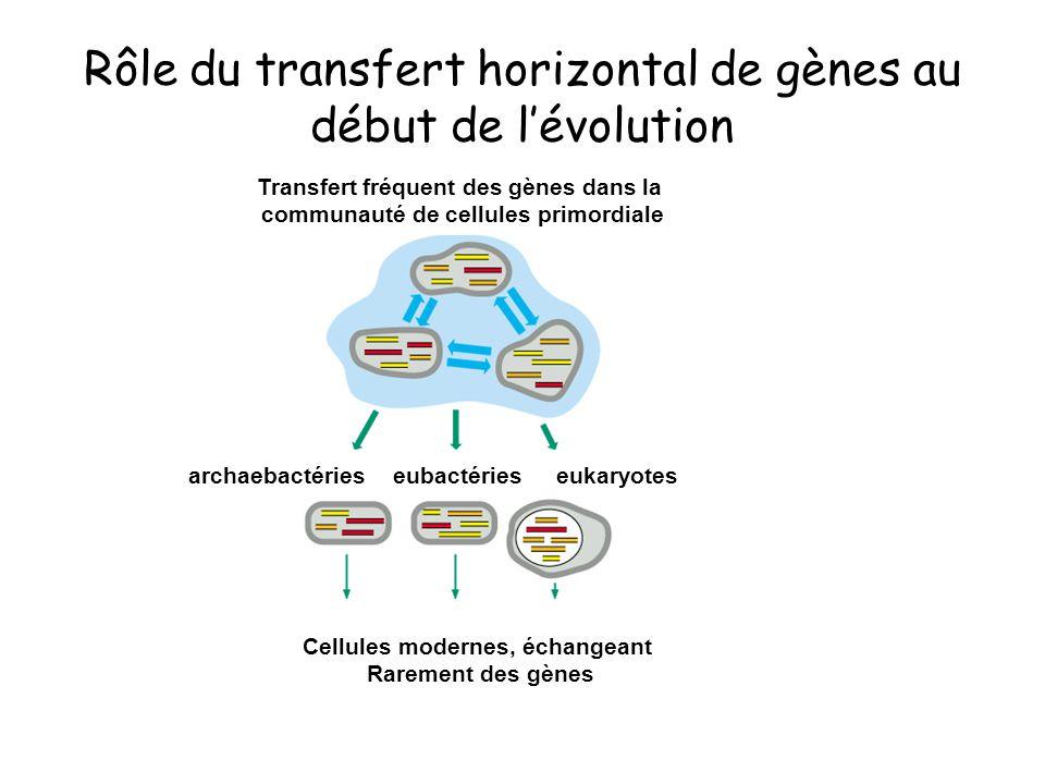 Rôle du transfert horizontal de gènes au début de lévolution eubactériesarchaebactérieseukaryotes Cellules modernes, échangeant Rarement des gènes Tra