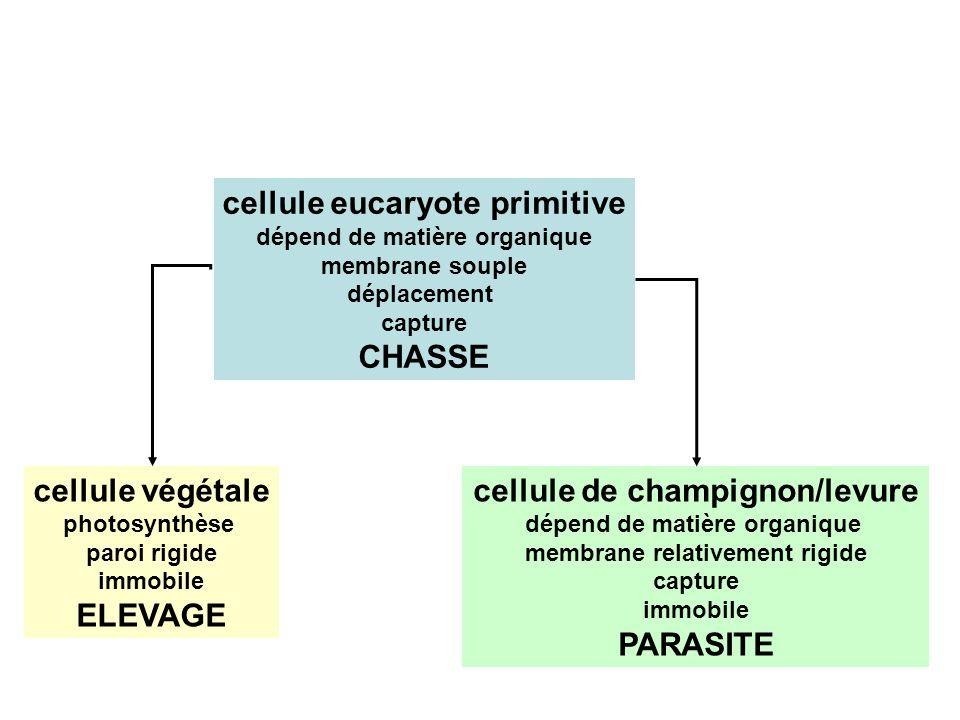 cellule eucaryote primitive dépend de matière organique membrane souple déplacement capture CHASSE cellule végétale photosynthèse paroi rigide immobil
