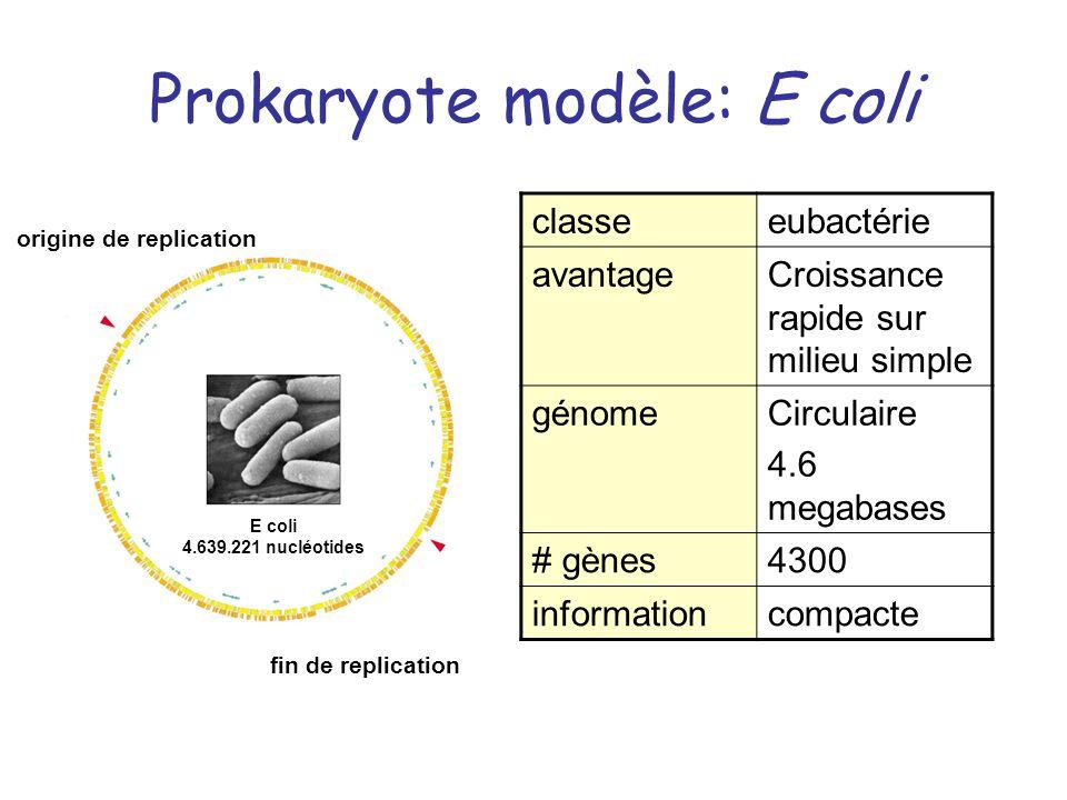 Prokaryote modèle: E coli E coli 4.639.221 nucléotides origine de replication fin de replication classeeubactérie avantageCroissance rapide sur milieu