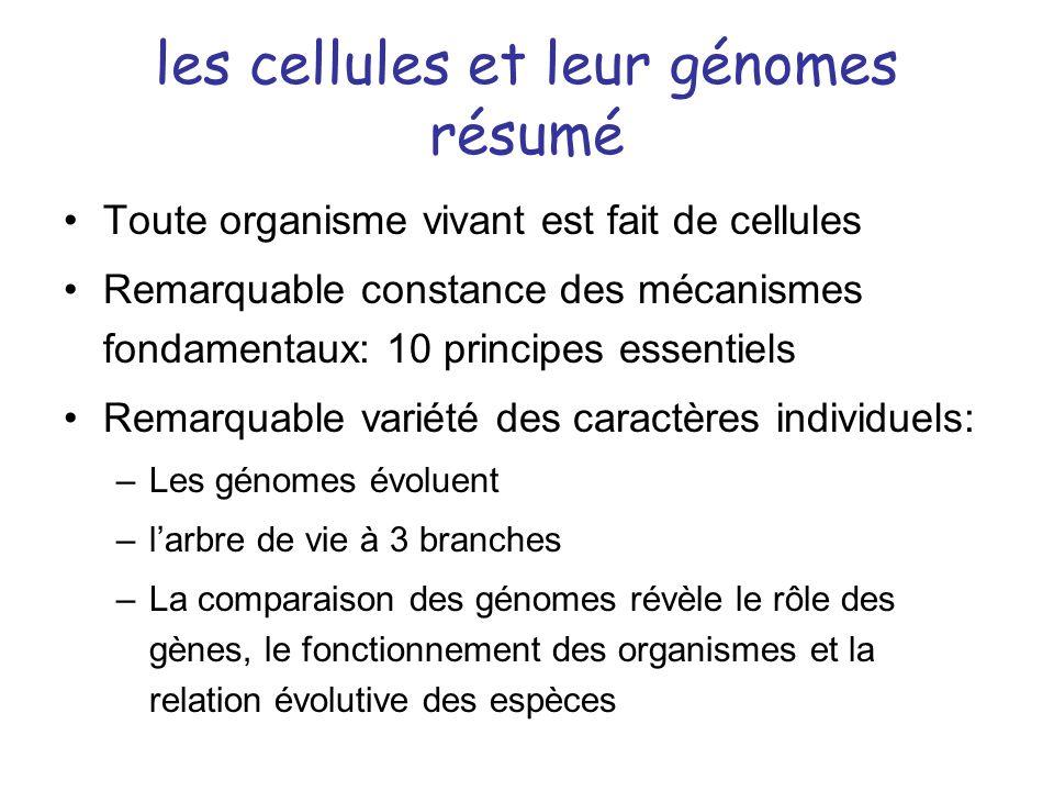 les cellules et leur génomes résumé Toute organisme vivant est fait de cellules Remarquable constance des mécanismes fondamentaux: 10 principes essent