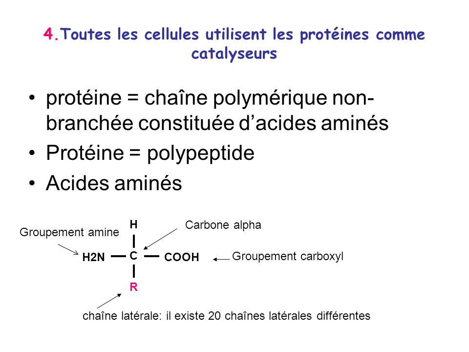 4.Toutes les cellules utilisent les protéines comme catalyseurs protéine = chaîne polymérique non- branchée constituée dacides aminés Protéine = polyp