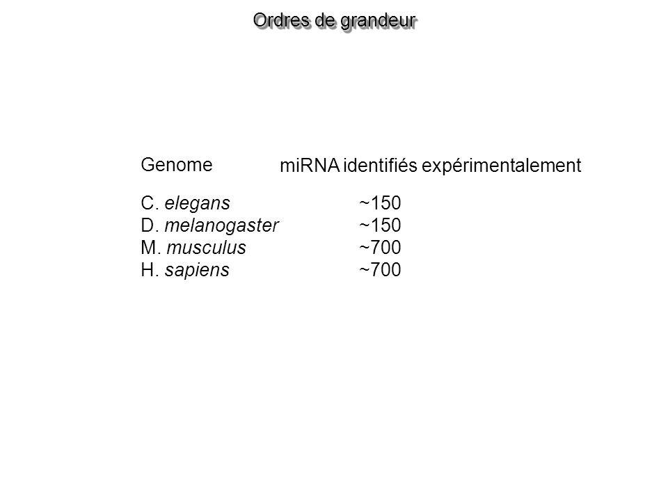 Ordres de grandeur Genome miRNA identifiés expérimentalement C.
