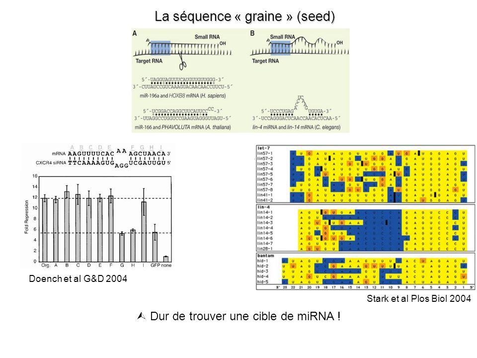 La séquence « graine » (seed) Dur de trouver une cible de miRNA .