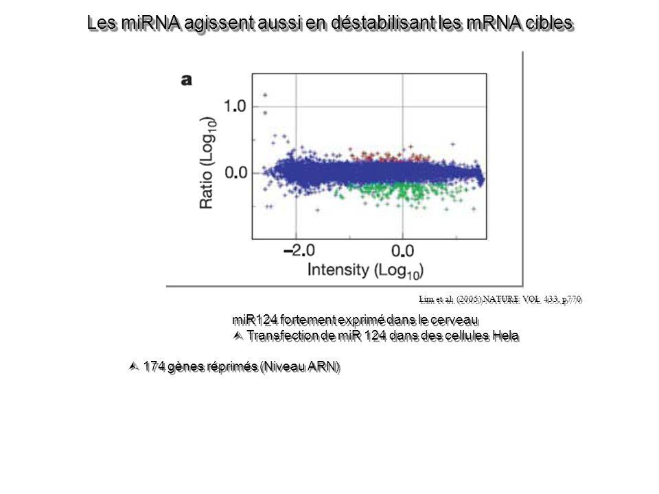 Les miRNA agissent aussi en déstabilisant les mRNA cibles miR124 fortement exprimé dans le cerveau Transfection de miR 124 dans des cellules Hela miR124 fortement exprimé dans le cerveau Transfection de miR 124 dans des cellules Hela Lim et al.