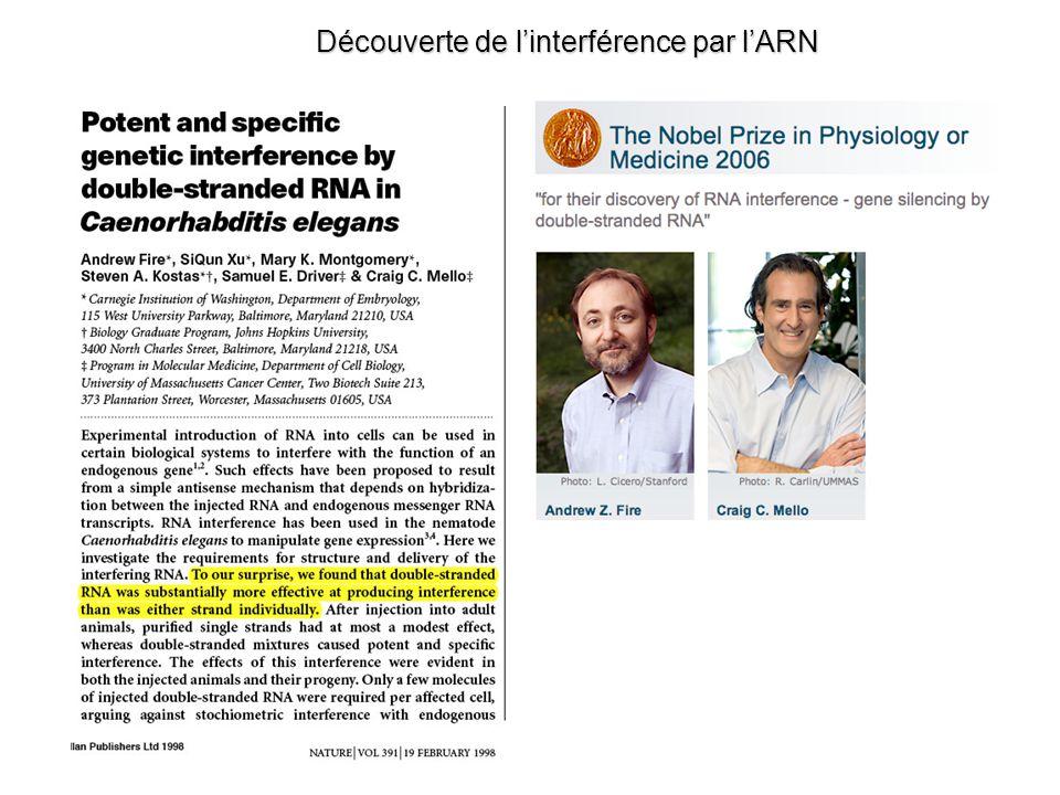 Pri-miRNA --> Pré-miRNA : le complexe « microprocessor » Han et al.