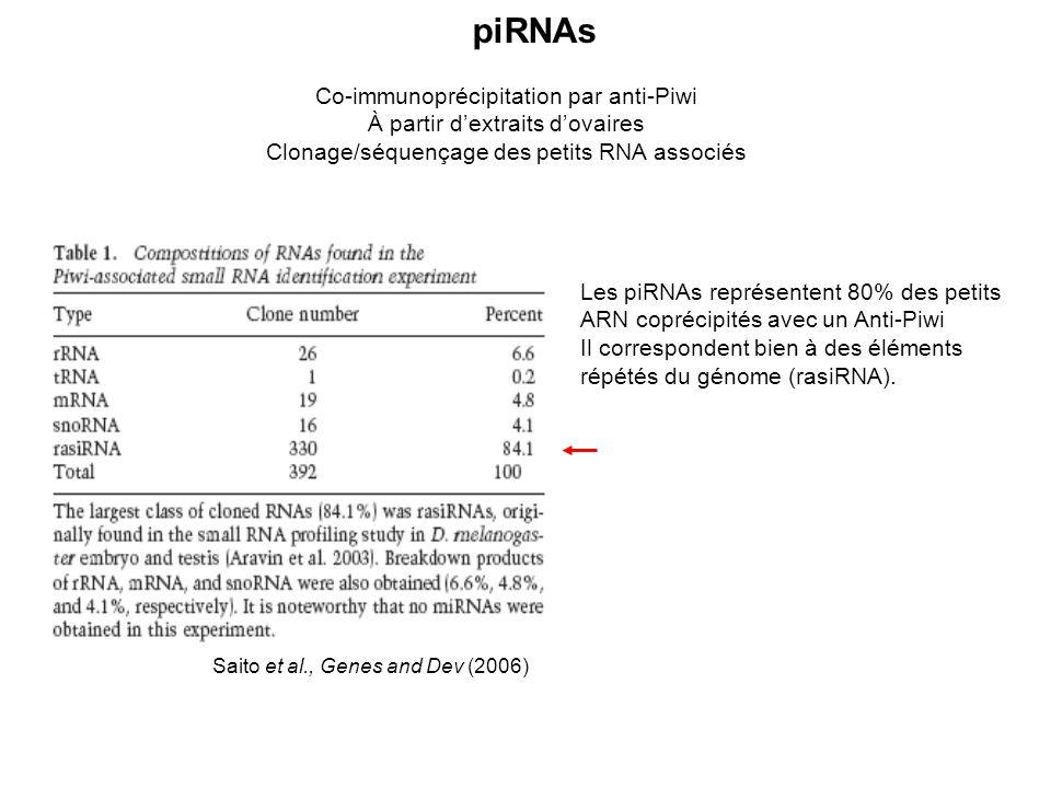 Co-immunoprécipitation par anti-Piwi À partir dextraits dovaires Clonage/séquençage des petits RNA associés Saito et al., Genes and Dev (2006) Les piRNAs représentent 80% des petits ARN coprécipités avec un Anti-Piwi Il correspondent bien à des éléments répétés du génome (rasiRNA).