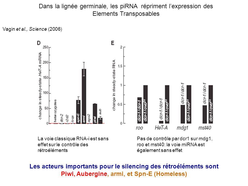 Vagin et al., Science (2006) La voie classique RNA-i est sans effet sur le contrôle des rétroéléments Pas de contrôle par dcr1 sur mdg1, roo et mst40: la voie miRNA est également sans effet Dans la lignée germinale, les piRNA répriment lexpression des Elements Transposables Les acteurs importants pour le silencing des rétroéléments sont Piwi, Aubergine, armi, et Spn-E (Homeless)