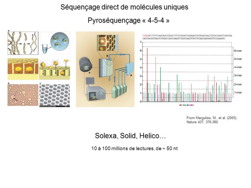 Séquençage direct de molécules uniques Pyroséquençage « 4-5-4 » From Margulies, M., et al.