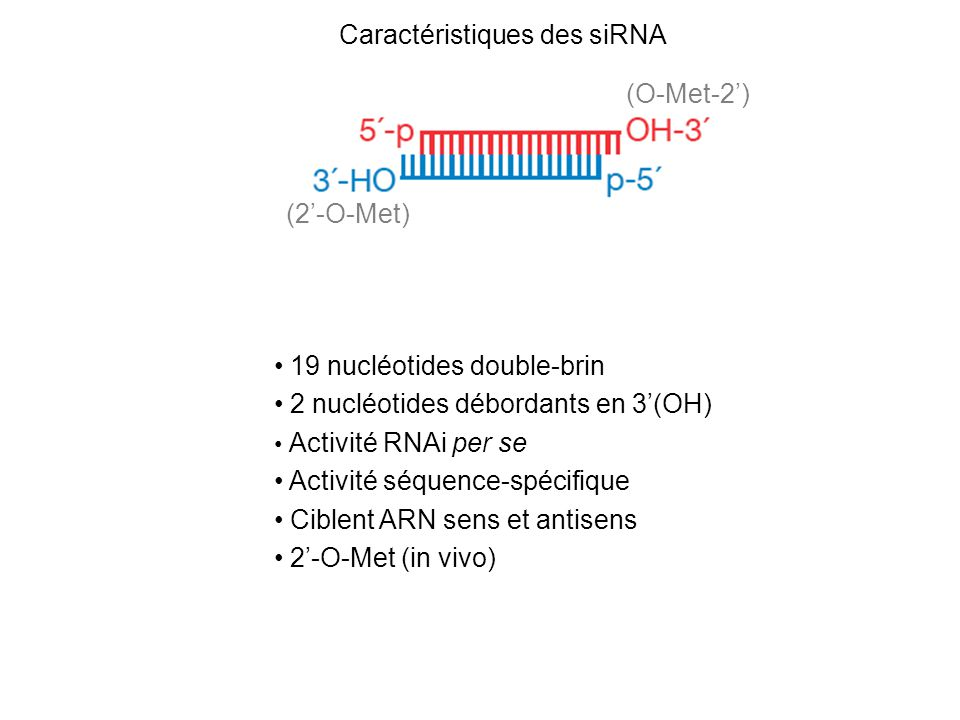 Répression traductionnelle Vs clivage Saxena et al JBC 2003