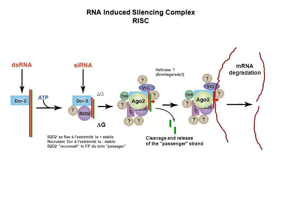 Modèles daction des miRNA Eulalio et al, Cell 2008