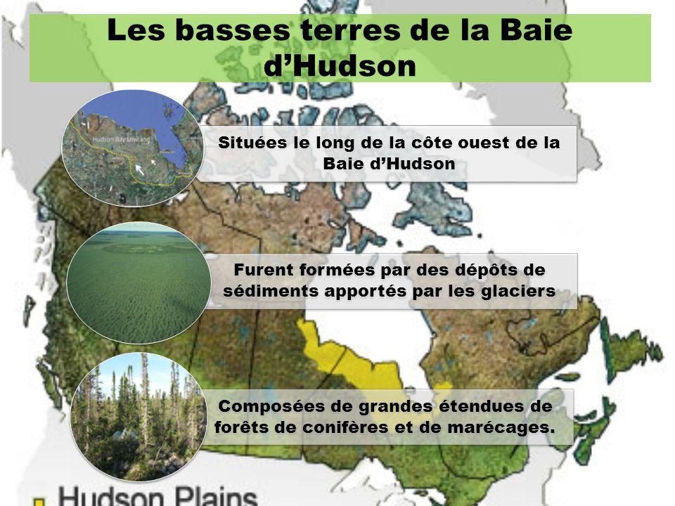 Les basses terres de la Baie dHudson Situées le long de la côte ouest de la Baie dHudson Furent formées par des dépôts de sédiments apportés par les g