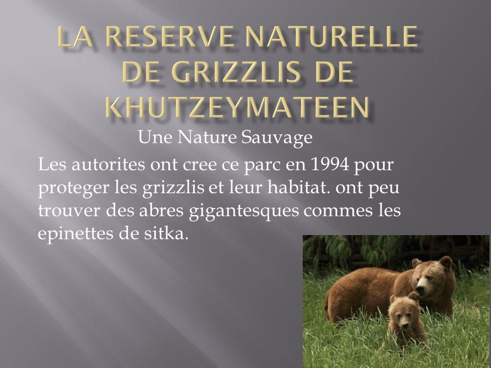 Une Nature Sauvage Les autorites ont cree ce parc en 1994 pour proteger les grizzlis et leur habitat. ont peu trouver des abres gigantesques commes le