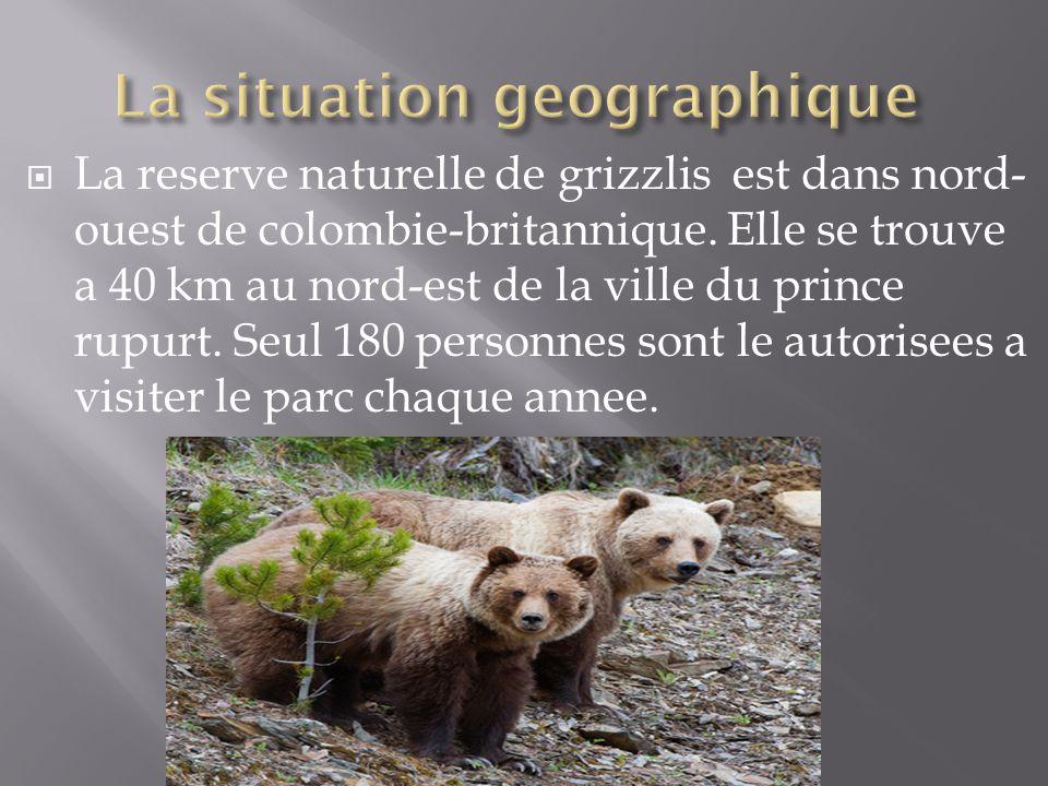 La reserve naturelle de grizzlis est dans nord- ouest de colombie-britannique. Elle se trouve a 40 km au nord-est de la ville du prince rupurt. Seul 1
