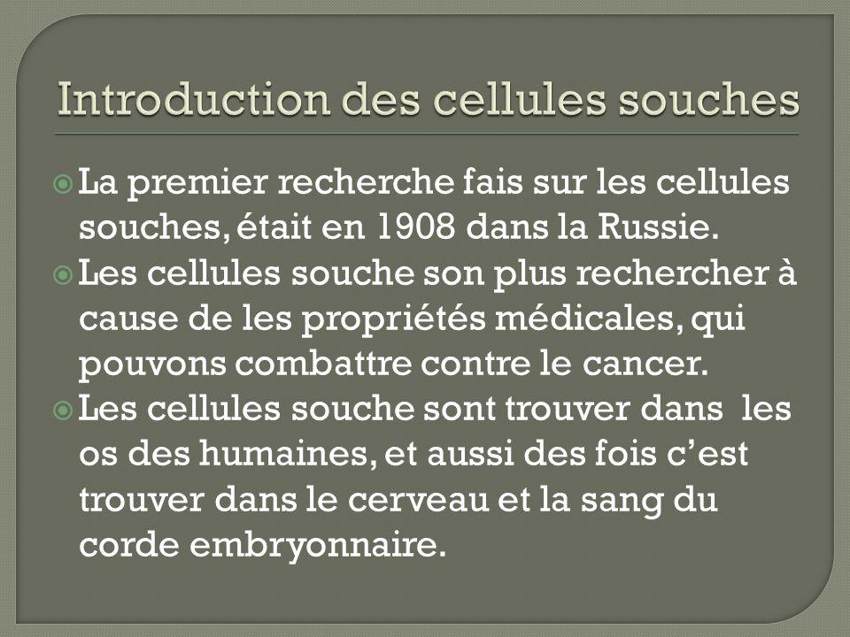 La premier recherche fais sur les cellules souches, était en 1908 dans la Russie.