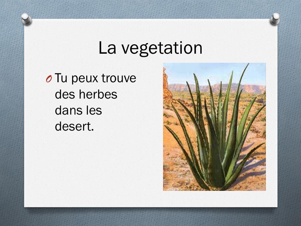 La vegetation O Tu peux trouve des herbes dans les desert.