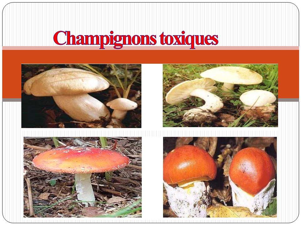 Généralités Définition: Champignon: cryptogames; pousse toujours dans des lieux humides ; souvent munis d un pied et d un chapeau ; 100000 espèces décrites à ce jour.