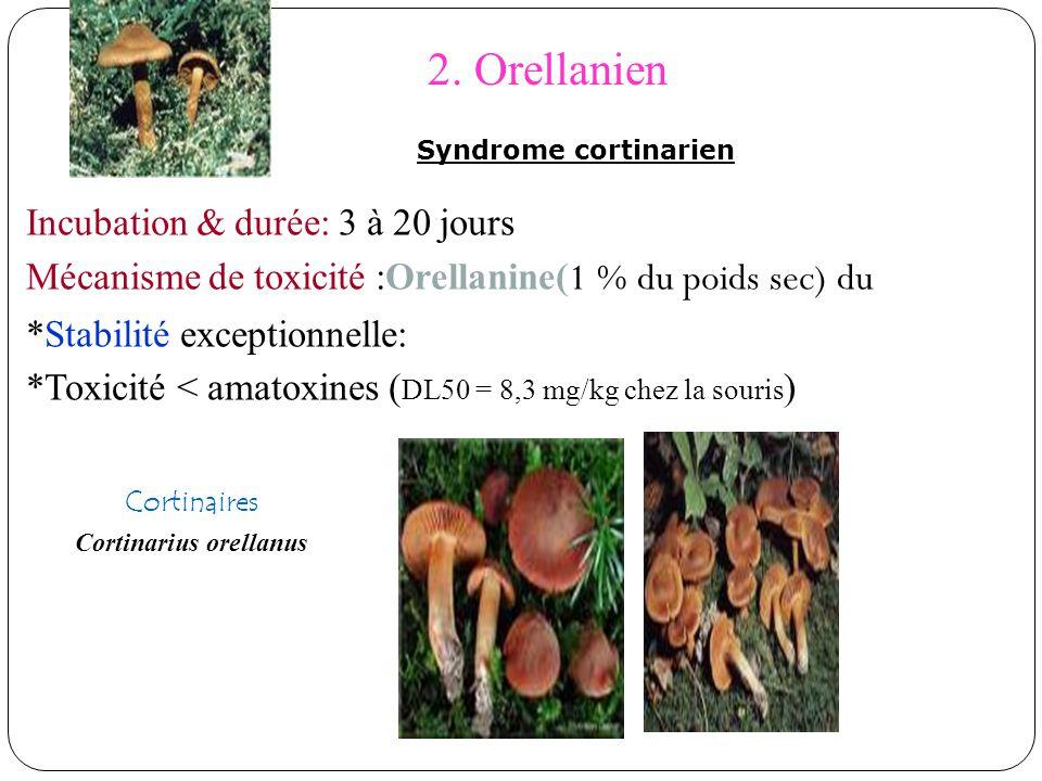2. Orellanien Incubation & durée: 3 à 20 jours Mécanisme de toxicité :Orellanine( 1 % du poids sec) du *Stabilité exceptionnelle: *Toxicité < amatoxin