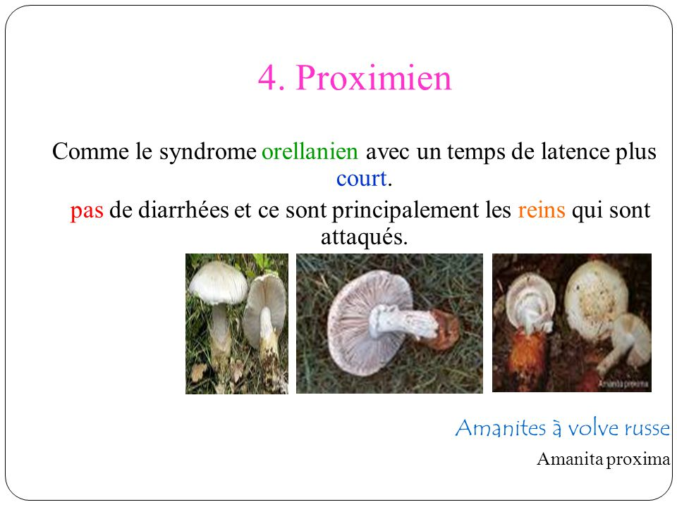4. Proximien Comme le syndrome orellanien avec un temps de latence plus court. pas de diarrhées et ce sont principalement les reins qui sont attaqués.