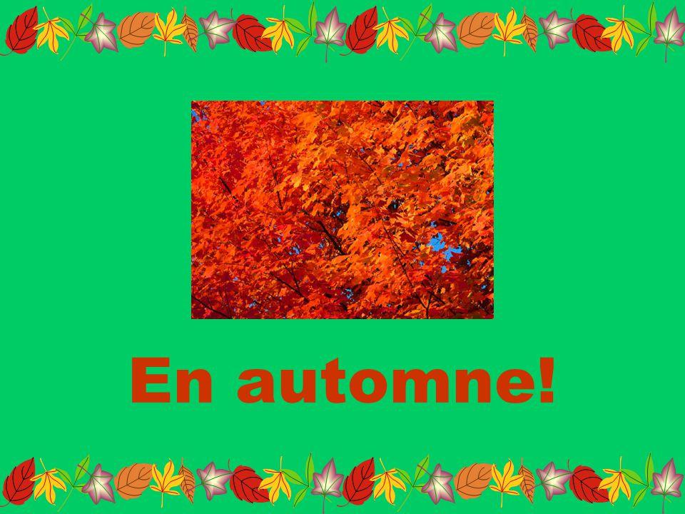 En automne!